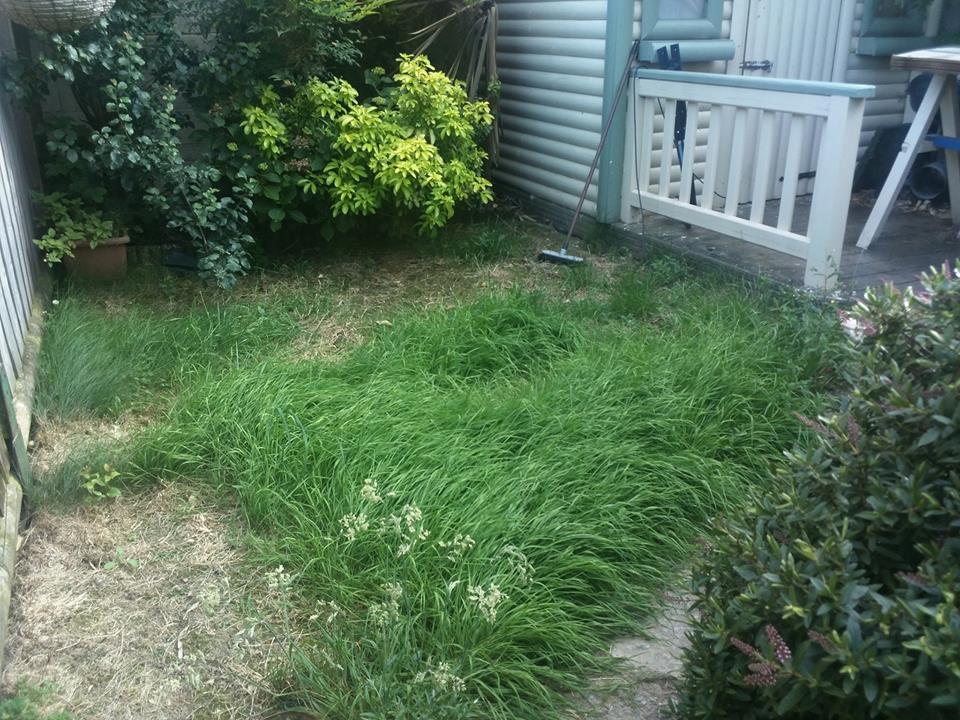 Garden untouched